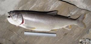La pêche à Salanfe